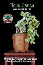 Ficus Carica, Higuera Silvestre