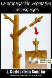 La propagacion vegetativa. Los Esquejes