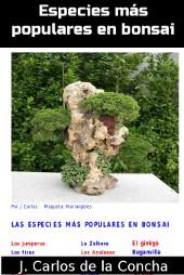 Especies para hacer bonsai