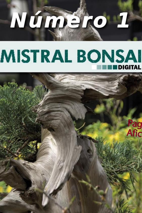 El Transplante. La manera de cambiar la tierra de los bonsái