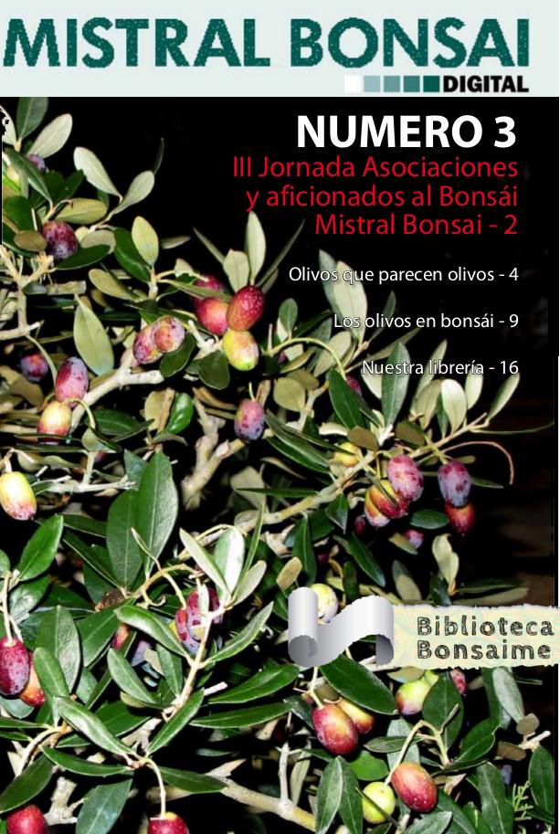 Los olivos en Bonsai