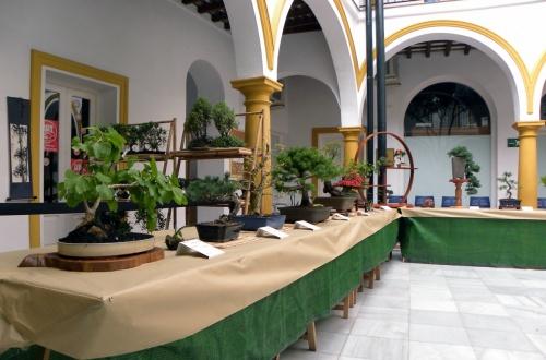 Bonsai El Chaparro