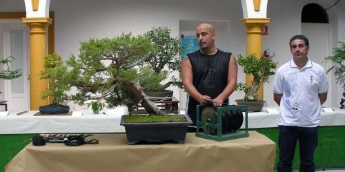 bonsai Sankofabonsai