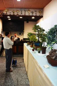 Exposicion Bonsai Cocentaina 2009