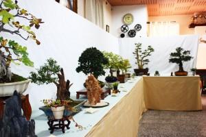 Bonsais en la Exposición de Cocentaina 2009
