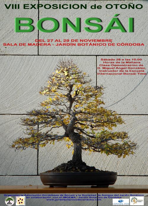 Exposicion Otoño Cordoba bonsai