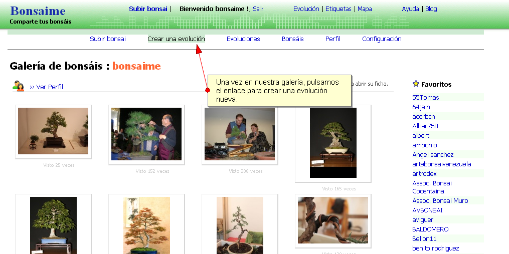 Paso 2 - Crear evolucion bonsai