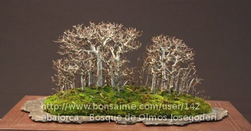 Bosque de Olmos Josegoderi