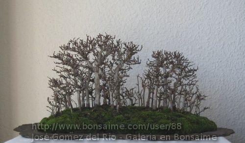 Bosque de Olmos - Jose Gomez del Rio
