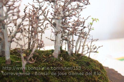 Bosque de Olmos de Jose Gomez