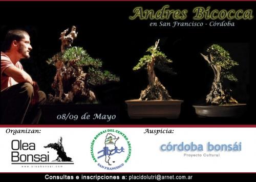 Modelando Madera Yamadori - Andres Bicocca