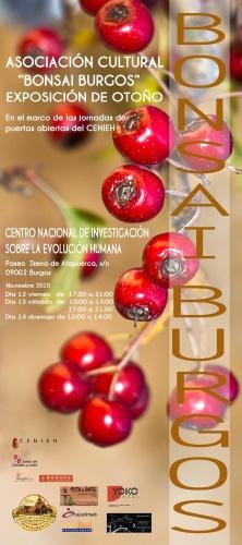 Exposicion Asociacion Cultural Bonsai Burgos